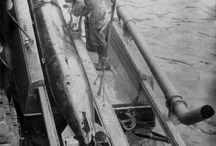 PT boat torpedo