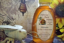 Natural Raw Palmetto Honey / Palmetto Honey is a wonderful honey harvested right here in Central Florida. It has a rich buttery taste. We recently took first place with this honey in a honey contest! Studies at the University of Florida have shown that this honey may help ward off prostate cancer. Winter Park Honey is a small family owned honey company keeping bees throughout Central Florida and, during the summer, we keep bees near Winter Park, Colorado also.