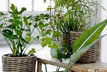 décor plantes