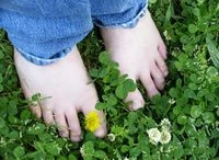 lawn - how to grow clover lawn