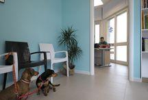 Studio veterinario - Vet ambulatory / A project of mine in Sardinia, Italy
