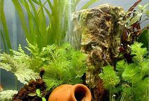 Beautiful Aquariums / Saltwater and Freshwater tanks and aquariums.  Images and tips for building your own fish tank