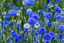 Цветочки мои любимые