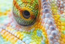 Lizards ans snakes