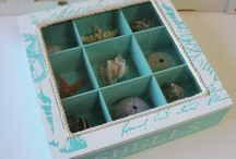 Sea shells by the seaside