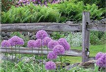Мечты о прекрасном саде