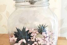 My Glass Terrariums / Pics of my plant terrariums
