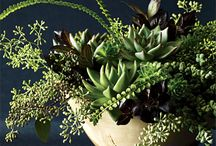 Green Flower Arrangements & Bouquets / Green flower arrangements, bouquets, centerpieces, event decor, corsages, boutonnieres / by Fly Me To The Moon Florists