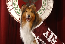 All things Aggie / by Torrie Gilleland