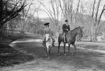 Horses in New York / Horse and Horse-Drawn Vehicles That Mobilized New Yorkers for Centuries