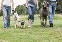 New Mommy / Dog training  / by Maritza Gonzalez