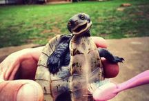 cute smiling turtle