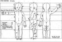 baby anatomy