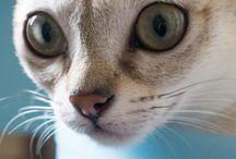cha cha chats...... / des chats, les miens et d'autres que je connais ou non, en photos ou illustrés, pour l'amour d'eux