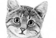 kat tekenen
