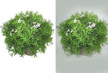 Photoshop Clipping Path