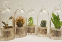 Plant art / Terrariums, pots and other cool ideas