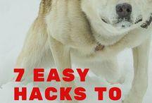 Dogs -> Training