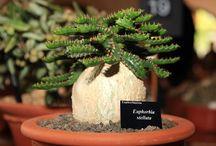 Succulent and Cucti