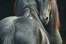 kone cválajú našou dušou...