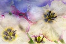 Transparent floral photography / light box / high key