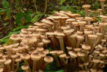 садовые грибы