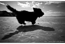 Dogs enjoy the Gower too! / Gower Edge self catering welcomes multiple pets at no additional charge. Our pets have always enjoyed a holiday, and as you can see by the photos below, other pets and their owners certainly love the area! LIke it? Book it! www.gower-edge-holidays.co.uk