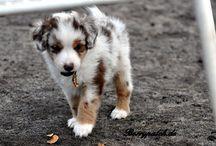 Pups <3 / by Nicole Digirolamo