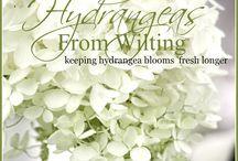 Flower & Herb Garden Tips