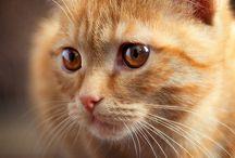 ORANGE TABBY CATS / by Jo Chandler