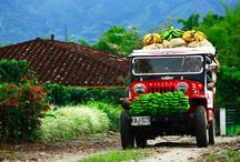 cafetales colombianos