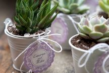 succulents baby shower