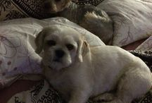 Three dogs: Dimy , Theobaldo and Amy / Three very smart and cute puppies