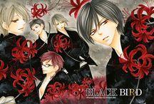 Black Bird - Kanoko Sakurakouji