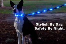 Pet Accessories / Unique Accessories for Your Pet