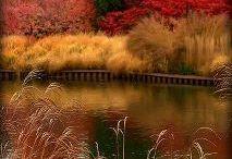 Beautiful Scenes / by Rachel Hauck Author