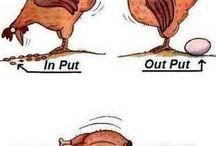 Kippies / Alleen kippen