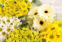 Minhas Flores Amarelas
