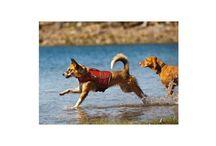 Été ☼ / Les produits indispensables à avoir cet été pour votre chien :  protection et soutien pour votre animal.