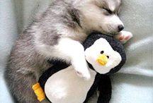 Hundi&Katzi