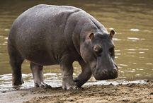 Stephanie Arne Blogs /  Behind the Scenes at Wild Kingdom | Sustainability | Animals | Travel/Adventure | Wildlife Careers | Wellness