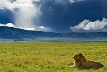 Safaris in Tanzania : A Close Look to the Wilderness