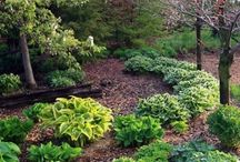 landscaping shade garden