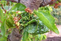 Cuidados #jardín / Cuidados en general y consejos para su mantenimiento.