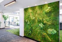 Zeleň v interiéri