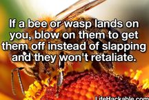 Harmful/beneficial garden pests/bugs. / by Jeanne Scottie mom