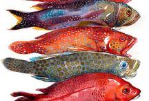 Cara de pez / Fish and art