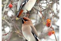Birds I've seen