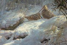 Wildlife Art Prints Shop