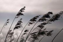 Fotografie Natuur